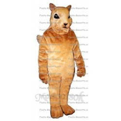 Buy cheap Squirrel mascot costume.